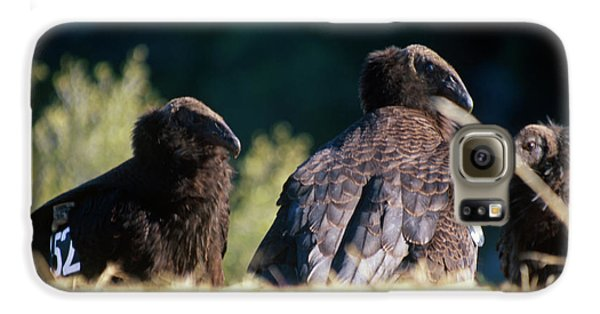 California Condors Galaxy S6 Case