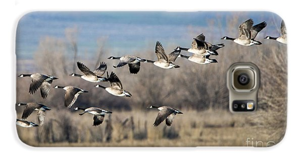 Canada  Geese Flock Galaxy S6 Case by Mike Dawson