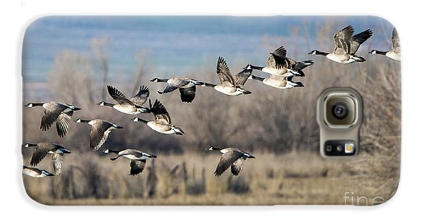 Canada  Geese Flock Galaxy S6 Case