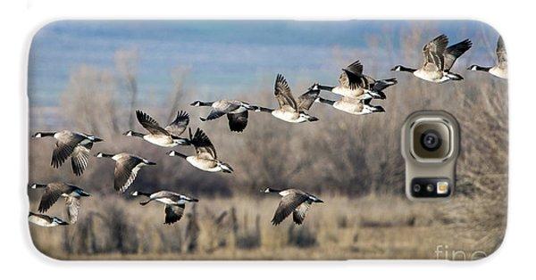 Canada  Geese Flock Galaxy S6 Case by Mike Dawson