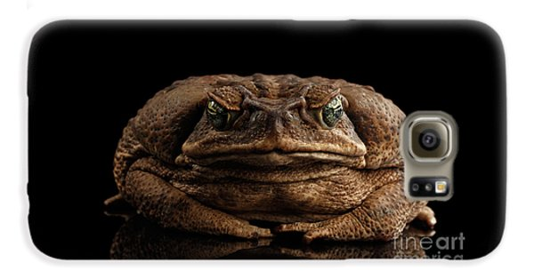 Cane Toad - Bufo Marinus, Giant Neotropical Or Marine Toad Isolated On Black Background, Front View Galaxy S6 Case