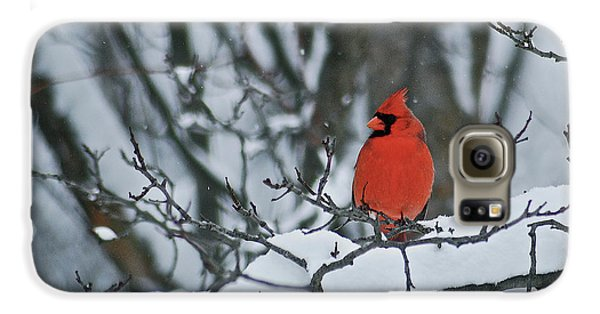 Cardinal And Snow Galaxy S6 Case by Michael Peychich