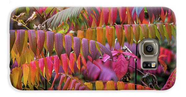 Galaxy S6 Case featuring the photograph Carnival Of Autumn Color by Bill Pevlor