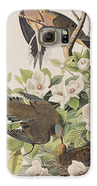 Carolina Turtle Dove Galaxy S6 Case by John James Audubon