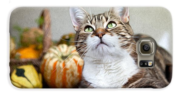 Cat And Pumpkins Galaxy S6 Case by Nailia Schwarz
