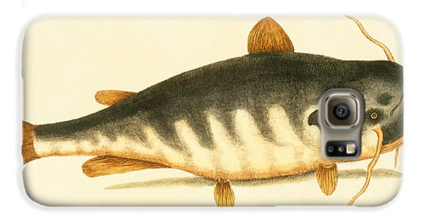 Catfish Galaxy S6 Case by Mark Catesby