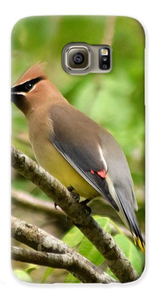 Cedar Wax Wing 1 Galaxy S6 Case by Sheri McLeroy