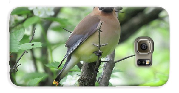 Cedar Wax Wing Galaxy S6 Case by Alison Gimpel