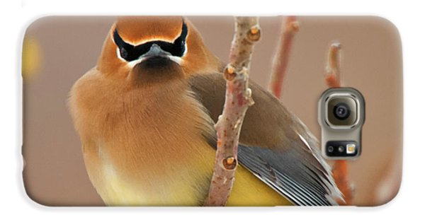 Cedar Wax Wing Galaxy S6 Case by Carl Shaw
