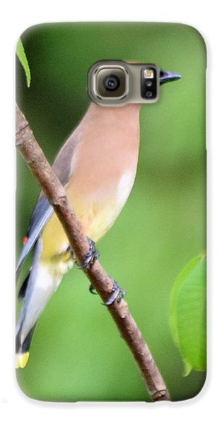 Cedar Wax Wing Profile Galaxy S6 Case by Sheri McLeroy