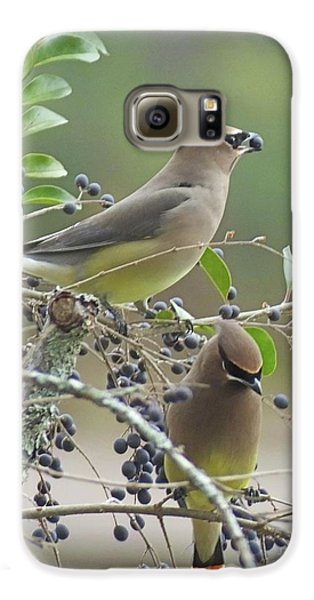 Cedar Wax Wings Galaxy S6 Case by Lizi Beard-Ward
