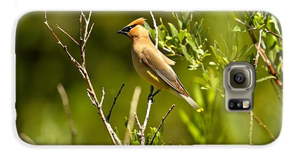 Cedar Waxwing At Glacier Galaxy S6 Case by Adam Jewell