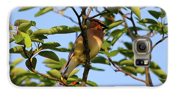 Cedar Waxwing Galaxy S6 Case by Mark A Brown
