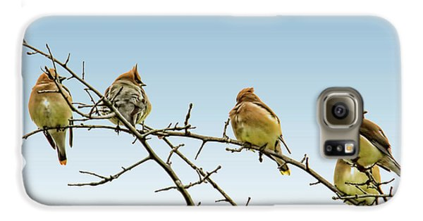 Cedar Waxwings Galaxy S6 Case by Geraldine Scull