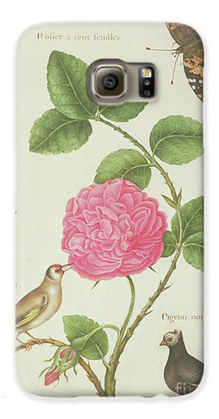 Centifolia Rose, Lavender, Tortoiseshell Butterfly, Goldfinch And Crested Pigeon Galaxy S6 Case by Nicolas Robert