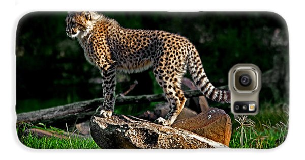 Cheetah Cub Finds Her Pride Rock Galaxy S6 Case by Miroslava Jurcik