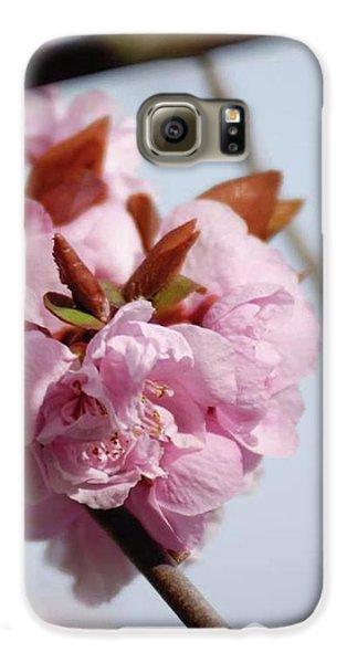 Cherry Blossoms Galaxy S6 Case
