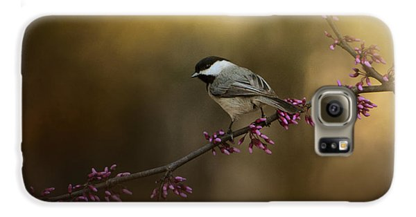 Chickadee In The Golden Light Galaxy S6 Case by Jai Johnson