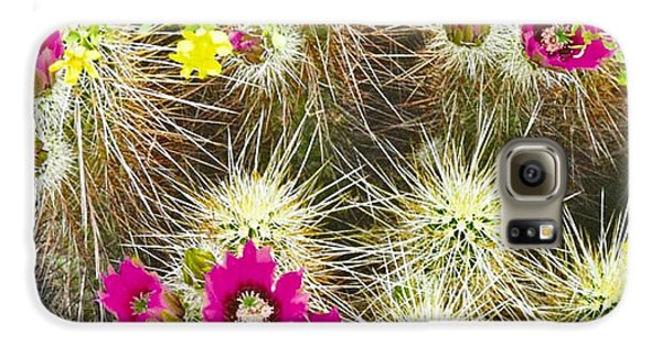 Cholla Cactus Blooms Galaxy S6 Case