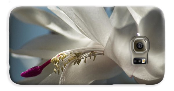 Galaxy S6 Case featuring the photograph Christmas Cactus Blossom by Yulia Kazansky