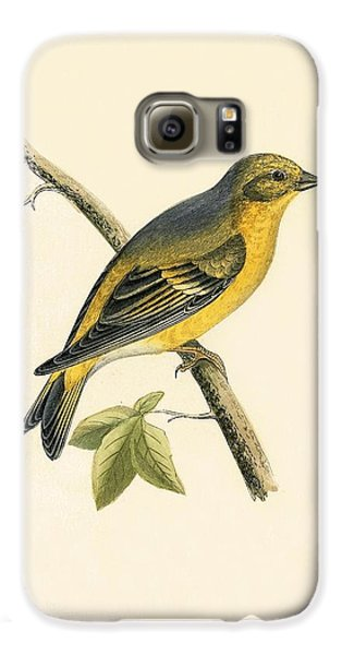 Citril Finch Galaxy S6 Case by English School
