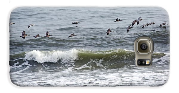 Classic Brown Pelicans Galaxy S6 Case by Betsy Knapp