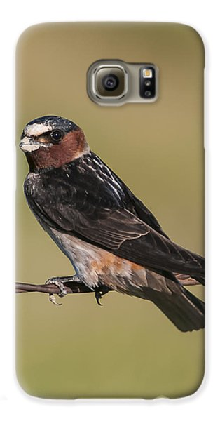 Galaxy S6 Case featuring the photograph Cliff Swallow by Gary Lengyel