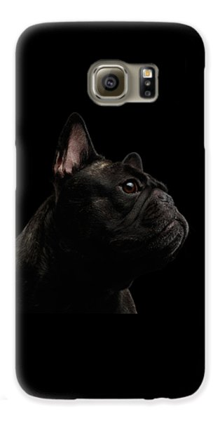 Dog Galaxy S6 Case - Close-up French Bulldog Dog Like Monster In Profile View Isolated by Sergey Taran