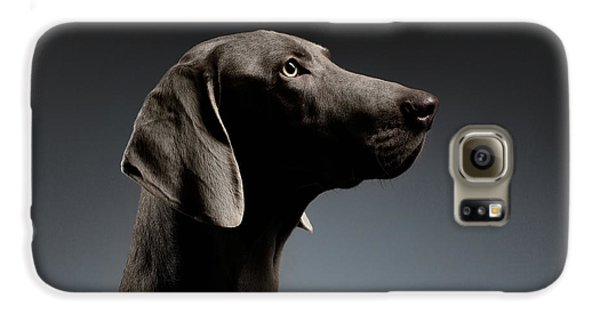 Dog Galaxy S6 Case - Close-up Portrait Weimaraner Dog In Profile View On White Gradient by Sergey Taran