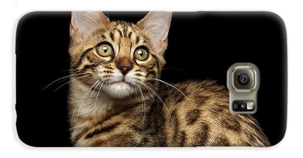 Closeup Bengal Kitty On Isolated Black Background Galaxy S6 Case by Sergey Taran