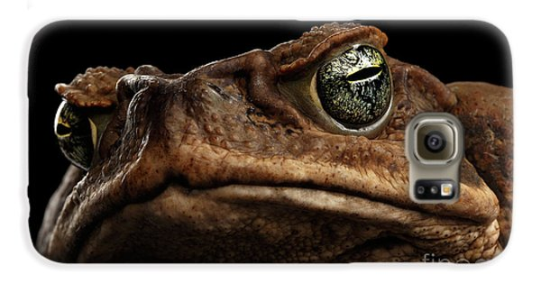 Closeup Cane Toad - Bufo Marinus, Giant Neotropical Or Marine Toad Isolated On Black Background Galaxy S6 Case