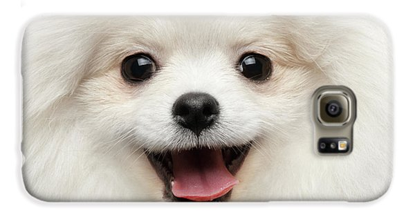 Closeup Furry Happiness White Pomeranian Spitz Dog Curious Smiling Galaxy S6 Case by Sergey Taran