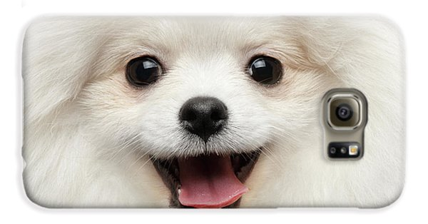 Dog Galaxy S6 Case - Closeup Furry Happiness White Pomeranian Spitz Dog Curious Smiling by Sergey Taran