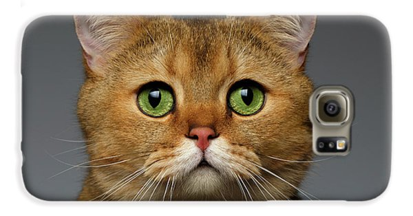 Closeup Golden British Cat With  Green Eyes On Gray Galaxy S6 Case by Sergey Taran