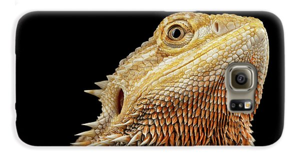 Closeup Head Of Bearded Dragon Llizard, Agama, Isolated Black Background Galaxy S6 Case by Sergey Taran