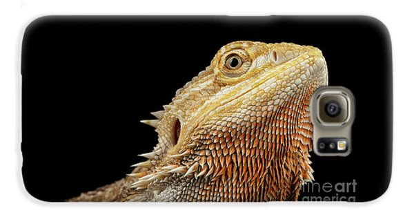 Closeup Head Of Bearded Dragon Llizard, Agama, Isolated Black Background Galaxy S6 Case