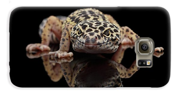 Closeup Leopard Gecko Eublepharis Macularius Isolated On Black Background, Front View Galaxy S6 Case by Sergey Taran