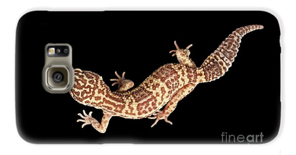 Closeup Leopard Gecko Eublepharis Macularius Isolated On Black Background Galaxy S6 Case
