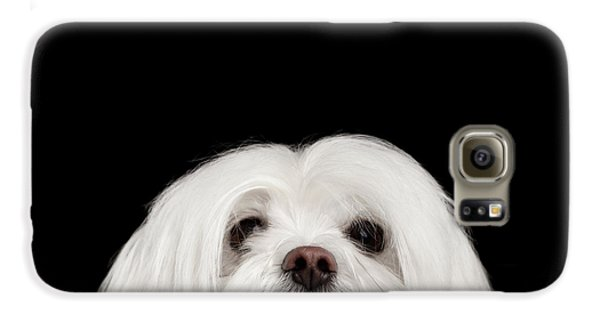 Closeup Nosey White Maltese Dog Looking In Camera Isolated On Black Background Galaxy S6 Case by Sergey Taran