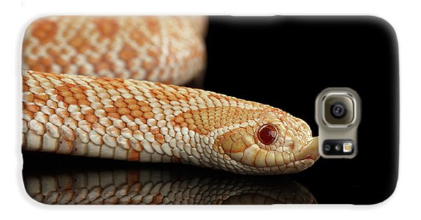 Closeup Pink Pastel Albino Western Hognose Snake, Heterodon Nasicus Isolated On Black Background Galaxy S6 Case
