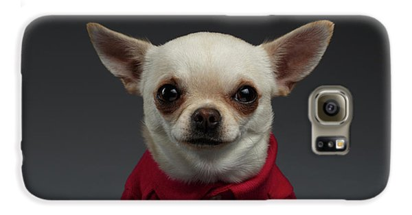 Closeup Portrait Chihuahua Dog In Stylish Clothes. Gray Background Galaxy S6 Case by Sergey Taran