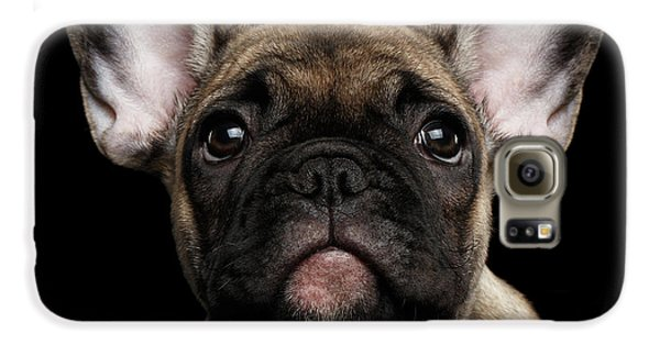 Closeup Portrait French Bulldog Puppy, Cute Looking In Camera Galaxy S6 Case by Sergey Taran