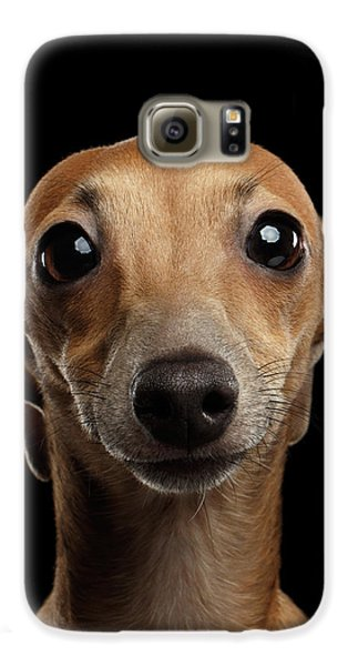 Closeup Portrait Italian Greyhound Dog Looking In Camera Isolated Black Galaxy S6 Case by Sergey Taran