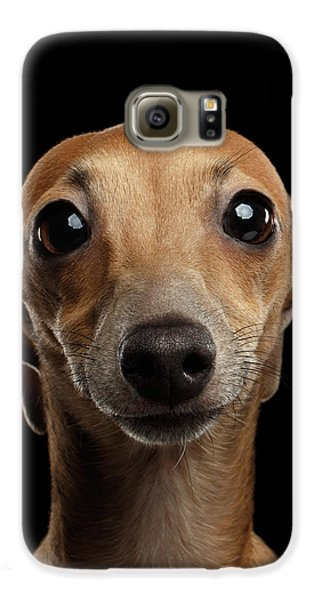 Dog Galaxy S6 Case - Closeup Portrait Italian Greyhound Dog Looking In Camera Isolated Black by Sergey Taran