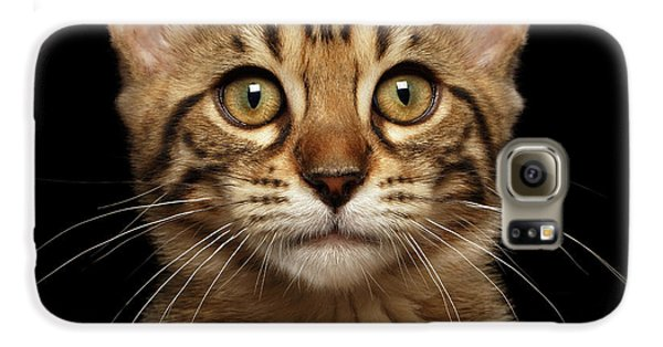 Closeup Portrait Of Bengal Kitty Isolated Black Background Galaxy S6 Case by Sergey Taran