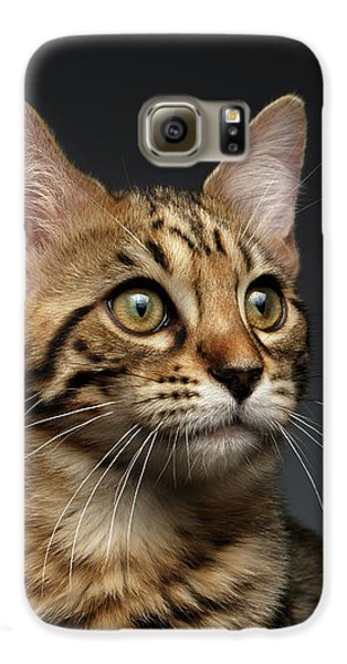 Closeup Portrait Of Bengal Male Kitty On Dark Background Galaxy S6 Case by Sergey Taran
