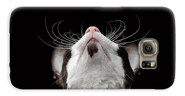 Cat Galaxy S6 Case - Closeup Portrait Of Cornish Rex Looking Up Isolated On Black  by Sergey Taran