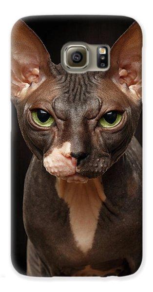 Cat Galaxy S6 Case - Closeup Portrait Of Grumpy Sphynx Cat Front View On Black  by Sergey Taran