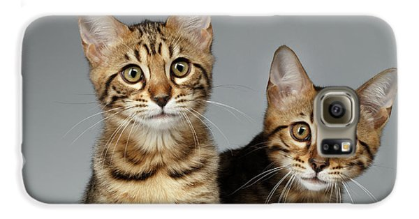 Closeup Portrait Of Two Bengal Kitten On White Background Galaxy S6 Case by Sergey Taran