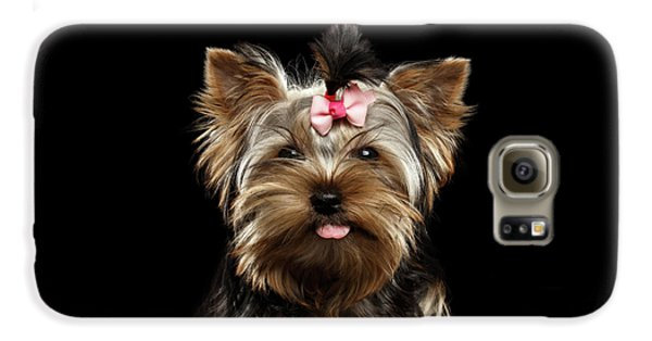 Dog Galaxy S6 Case - Closeup Portrait Of Yorkshire Terrier Dog On Black Background by Sergey Taran